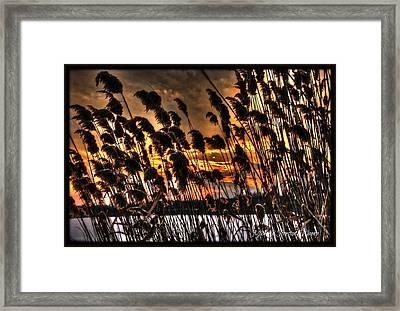Sunset At The Pond 5 Framed Print