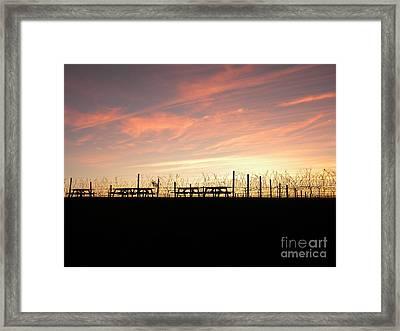 Sunset At The Vineyard Framed Print by Jaclyn Hughes Fine Art