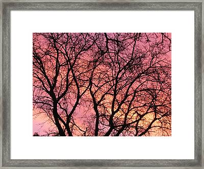 Sunset Behind The Trees Framed Print by Debra Madonna