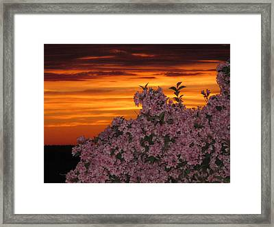 Sunset Blooms Framed Print