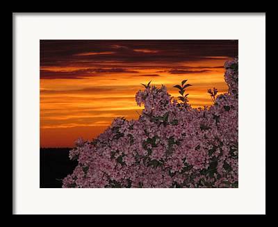 04003 Framed Prints