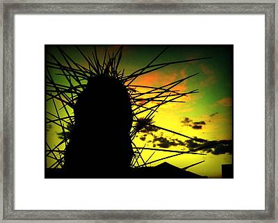Sunset Cactus Framed Print by Milton Thompson