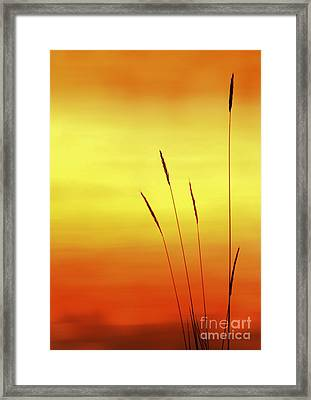 Sunset Framed Print by Christopher Mace