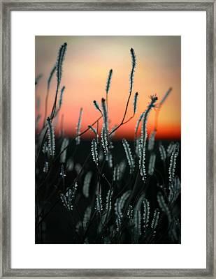 Sunset Desert Framed Print by Henry Kowalski