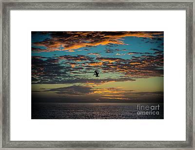 Sunset Dive Framed Print