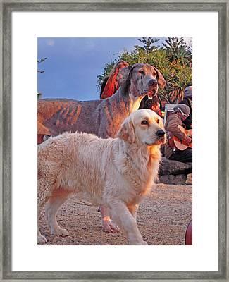 Sunset Dog Dreaming Framed Print by Ankya Klay