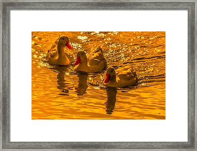 Sunset Ducks Framed Print by Brian Stevens