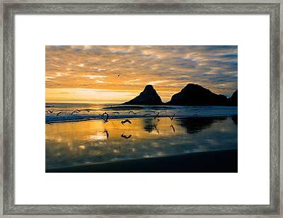 Sunset Flight Framed Print by Bonnie Bruno