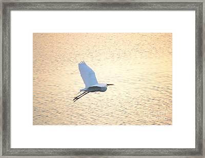 Framed Print featuring the photograph Sunset Flight by Carol  Bradley