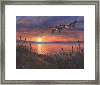 Sunset Flight Framed Print by Kim Lockman