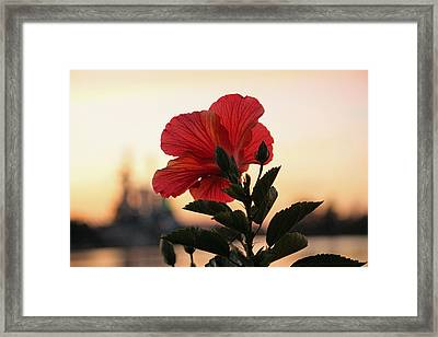 Framed Print featuring the photograph Sunset Flower by Cynthia Guinn