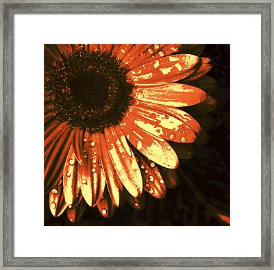 Sunset Flower Framed Print by Kami McKeon