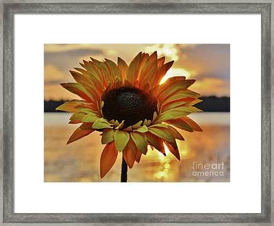 Sunset Flower Framed Print