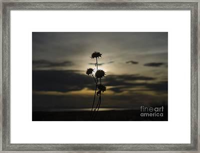 Sunset Flower Framed Print by Nicole Markmann Nelson