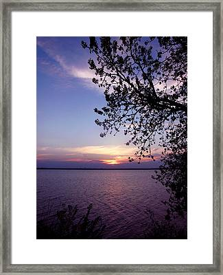 Sunset From The Trees Framed Print by Virginia Forbes