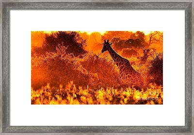 Sunset Giraffe Framed Print