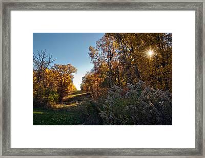 Sunset Graze Framed Print by Jeanne Sheridan