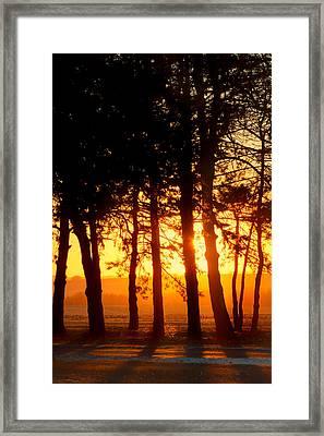Sunset Grove #2 Framed Print