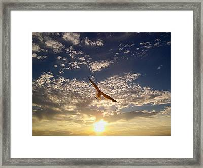 Sunset Gull Framed Print by Lora Simmons