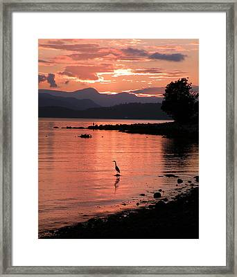 Sunset Heron Framed Print by Brian Chase
