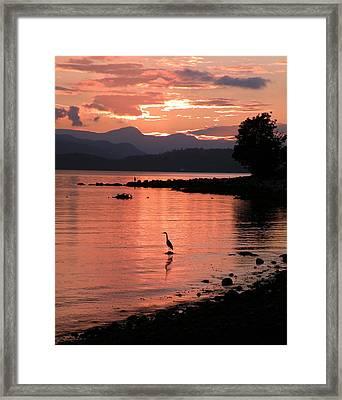 Sunset Heron Framed Print