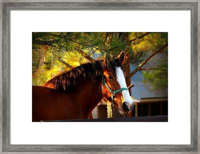 Sunset Horse Framed Print by Reid Callaway