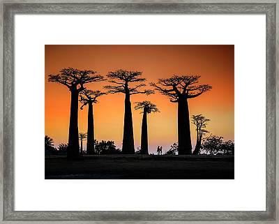 Sunset In Morondava Framed Print