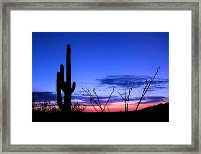 Sunset In Saguaro National Park Framed Print by Elizabeth Budd