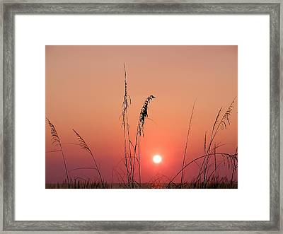 Sunset In Tall Grass Framed Print by Bill Cannon