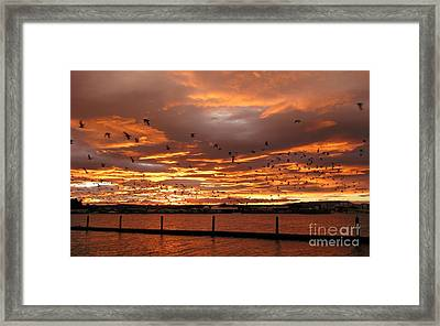 Sunset In Tauranga New Zealand Framed Print by Jola Martysz