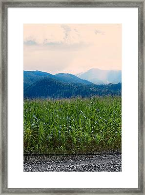 Sunset In The Cornfields Framed Print by Melanie Lankford Photography