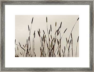 Sunset In The Countryside Framed Print