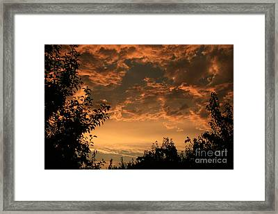 Sunset In The Orchard Framed Print by Cari Gesch