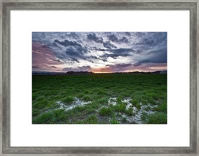 Sunset In The Swamp Framed Print by Eti Reid