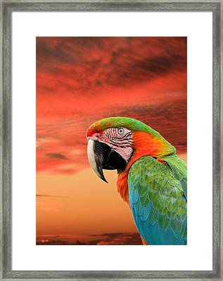 Sunset In The Tropics Framed Print by Rosalie Scanlon