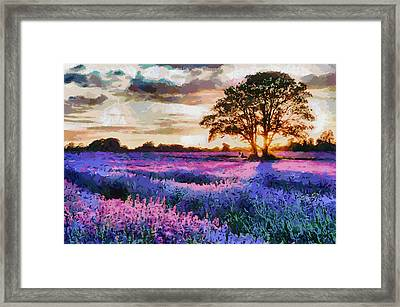 Sunset Lavender Field Framed Print
