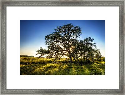 Sunset Oak Framed Print