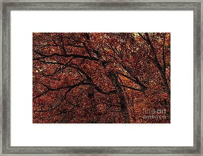 Sunset Oaks 2 Framed Print