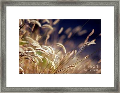 Framed Print featuring the photograph Sunset On Autumn Grass by Lincoln Rogers