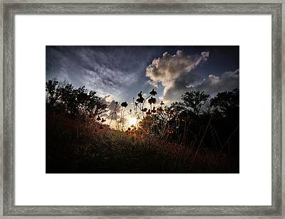 Sunset On Daisy Framed Print by Linda Unger