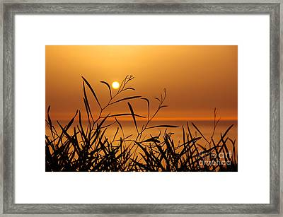 Sunset On Leaves  Framed Print by Carlos Caetano