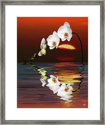 Sunset Orchids Framed Print by Angela A Stanton