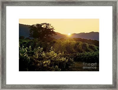 Sunset Over Carmel Valley Vineyard Framed Print