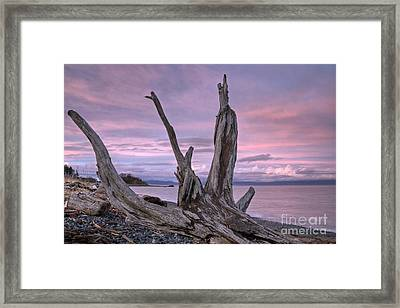 Framed Print featuring the photograph Sunset Over The Salish Sea by Inge Riis McDonald