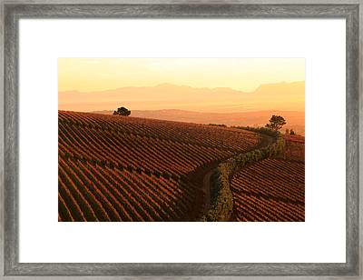 Sunset Over The Vineyards Framed Print