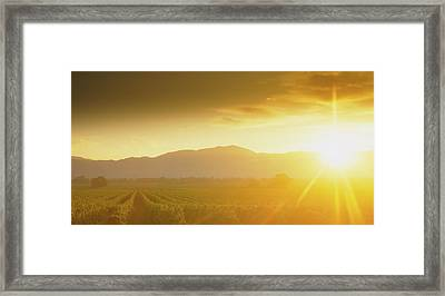 Sunset Over Vineyard, Napa Valley Framed Print