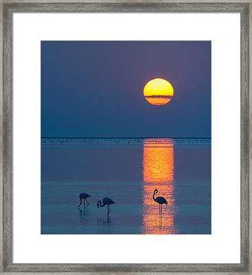 Sunset Over Walvis Bay - Flamingo Silhouette Photograph Framed Print by Duane Miller