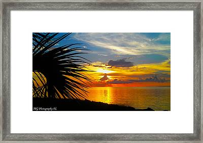 Sunset Palm Framed Print