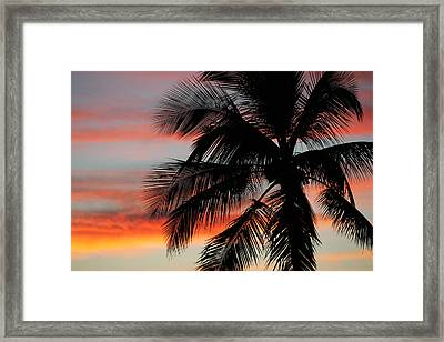 Sunset Palm Framed Print by Ty Helbach