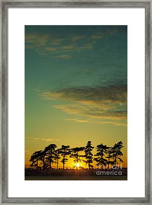 Sunset Pines Framed Print by Paul Grand